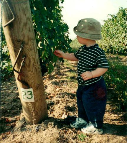 Watson's Vineyard